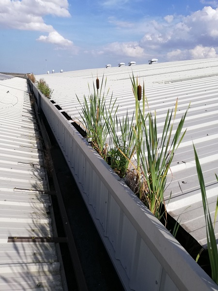 Arborforest roof condition